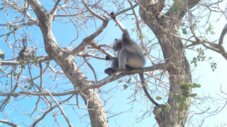 как обычно, вокруг толпы обезьян