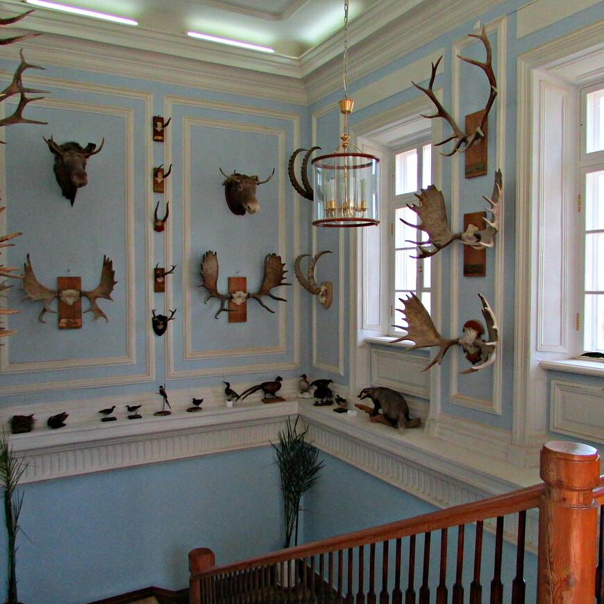 Парадная лестница с охотничьими трофеями.