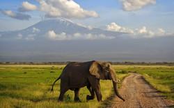 Слон затоптал туриста при попытке сделать селфи