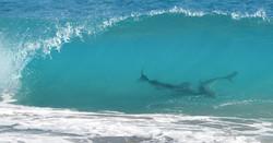 Во Флориде акулы за три часа три раза напали на туристов