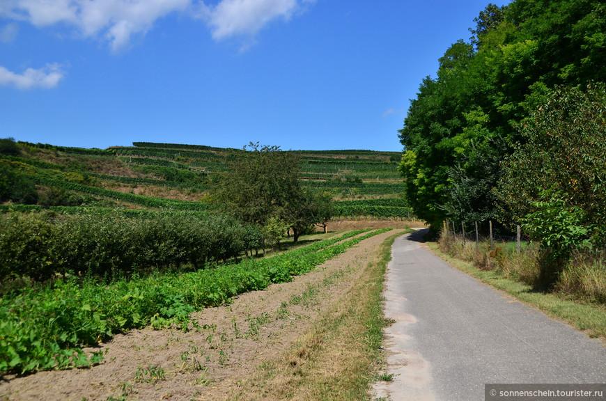 Баден — самый теплый уголок Германии. Нет, не Баден-Баден, а просто Баден. Самый южный регион федеральной земли Баден-Вюртемберг.