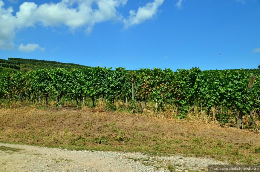 Протяжённость Кайзерштуля с юго-запада на северо-восток составляет 16 километров, наибольшая его ширина — 12,5 километра. Именно в регионе Кайзерштуль производят прекрасные вина. Вина с вулкана.