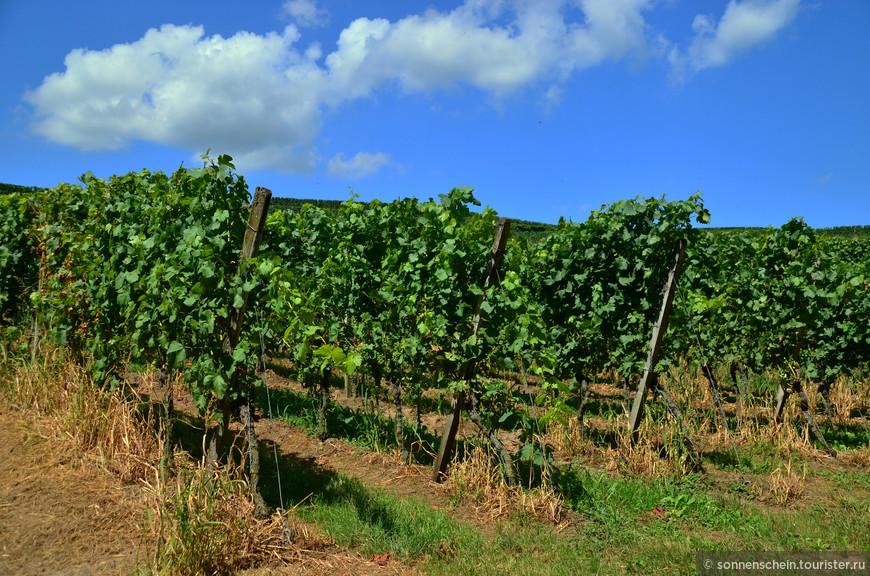 Обширный кратер потухшего вулкана отчасти определил уникальный микроклимат этого региона. Кайзерштуль — настоящая империя сортов винограда под общим названием бургундер.