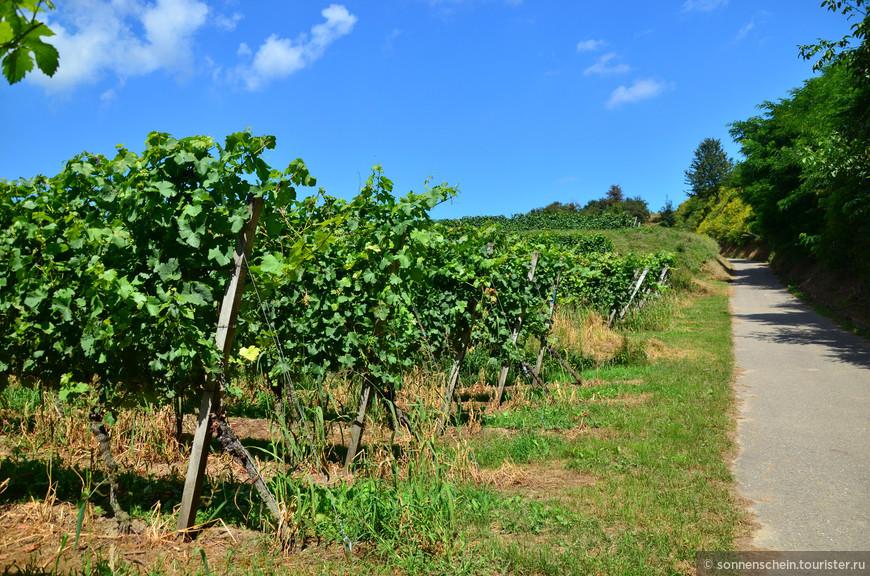 Мы были летом и виноград ещё не успел созреть.Осень — лучшее время для поездки в Кайзерштуль. Почти собран новый урожай. Кафе и рестораны вывесят таблички «Есть молодые вина и луковый пирог». Стоит попробовать, ведь это сезонное предложение! Многие винодельни Кайзерштуля приглашают на экскурсии по винным подвалам и дегустации своих вин.