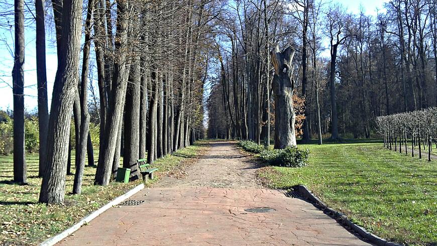 Аллеи парка. Парк был разбит в первой четверти XIX в., когда Горками владела Аграфена Алексеевна Дурасова.