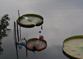 Зелёные зоны Бангкока - парк Рамы 9ого