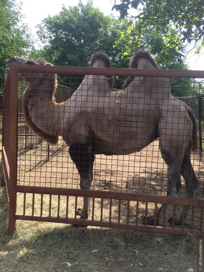 лучший зоопарк, что я видела. большинство вольеров огромны. лучше только зоопарк Сингапура, пожалуй. и редкие для урала животные: фламинго, слоны, жирафы...