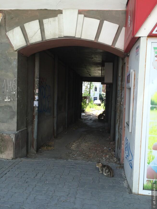 отдельное место занимают дворы. с главных улиц идут арки во все стороны. снаружи красиво, а внутри - разруха: сушится белье, готовится еда, бегают дети, сидят бездомные коты. их в ростове очень много и все живут на улице - тепло!