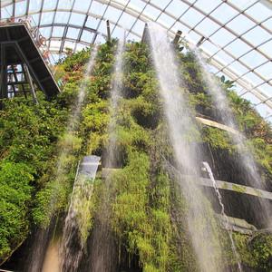 Сингапур. Облачный лес.
