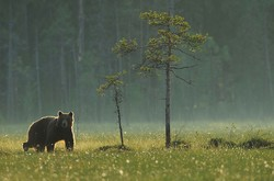В Словакии – нашествие медведей