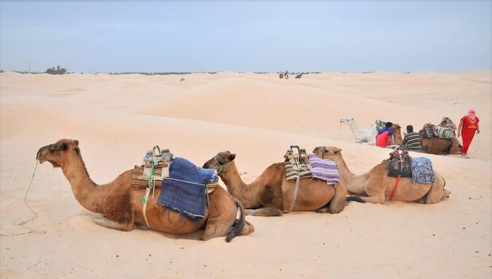 Нужна ли россиянам виза в Тунис и как е оформить