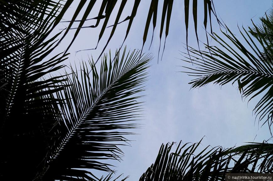 Фотоальбом из пальмовых листьев на 100 фотографий