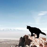 Турист из Нижнего Тагила поднялся на Эльбрус с котом