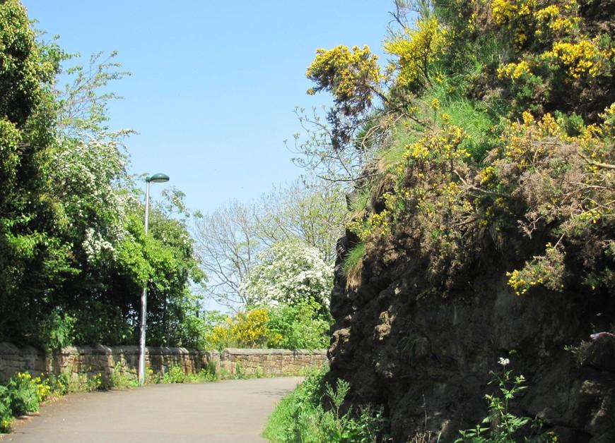 Дорога плавно поднимается вверх между кустов цветущего дрока.