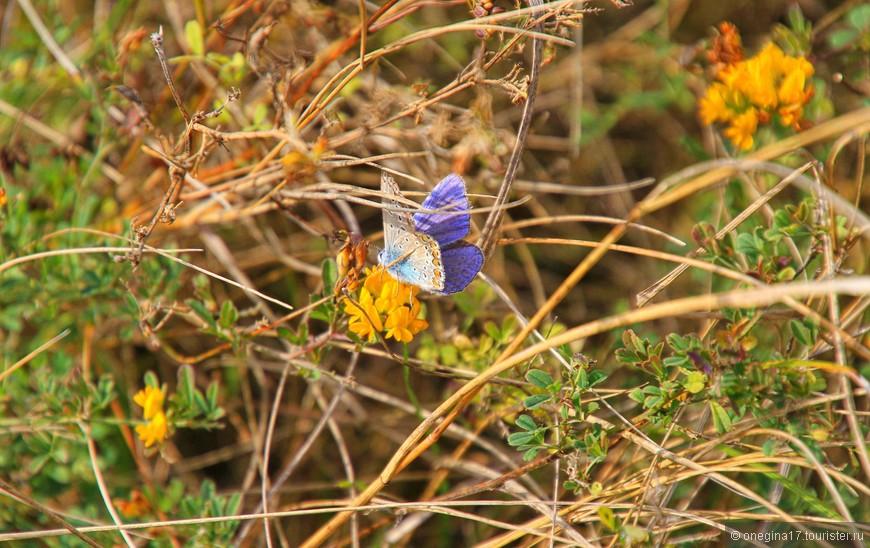 Бабочек здесь великое множество. Гоняться за каждой быстро устанешь и потом идешь, любуясь красотой, а бабочки продолжают кружить над головой, то слетаясь, то разлетаясь по степи...