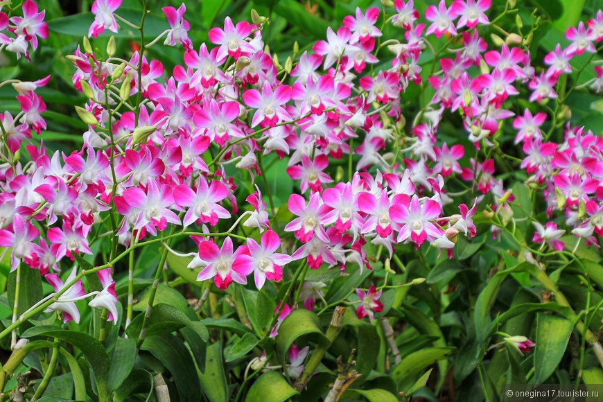 Такого количества орхидей я не встречала пока нигде больше!