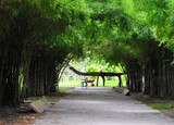 Зелёные зоны Бангкока — парк Королевы Сирикит