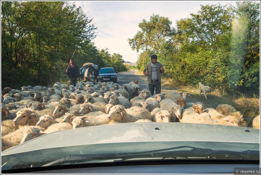 По пути в Давит-Гареджи. Овцы на дороге. И пусть весь мир подождет!))