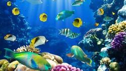 В Подмосковье откроют новый океанариум