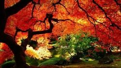 Осенние фестивали Китая