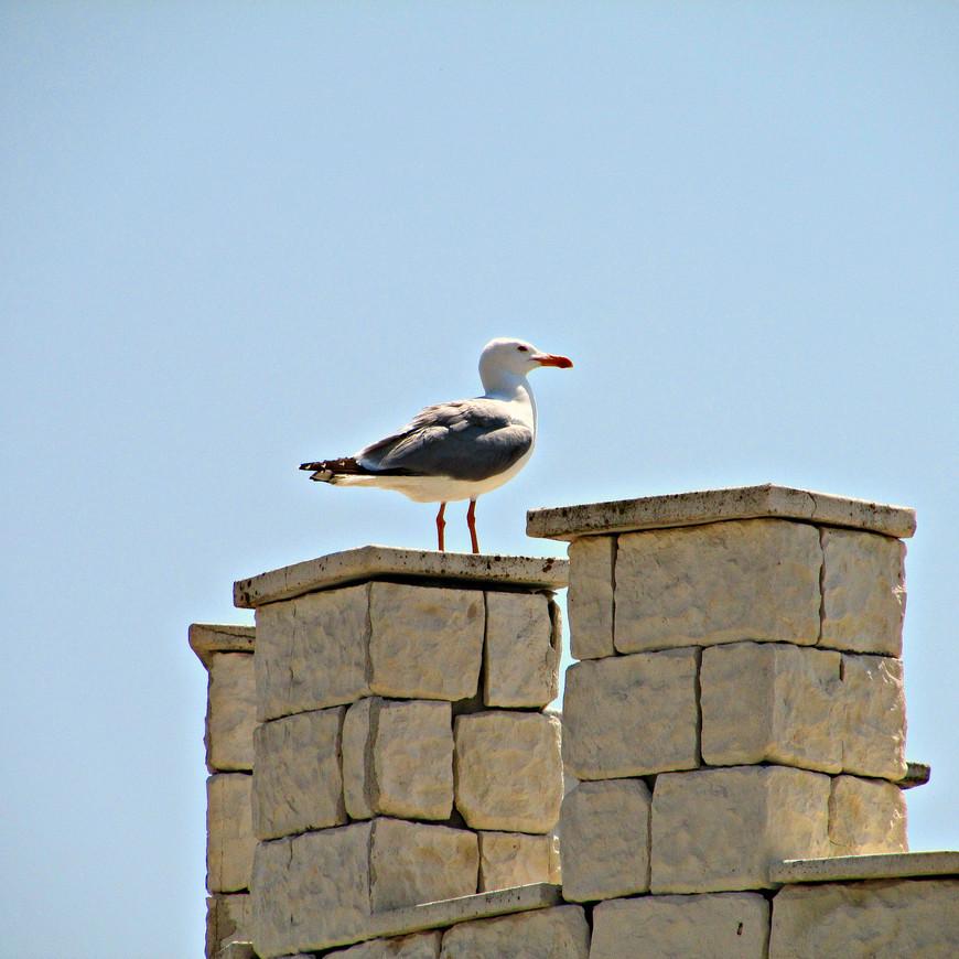 """На фасаде """"Гларуса""""  изображена такая же чайка. Наверно, она имеет какое-то отношение к его названию ."""
