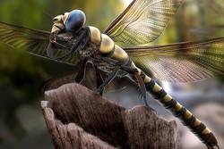 Люди с фамилиями, связанными с миром насекомых, смогут посетить зоопарк Москвы со скидкой