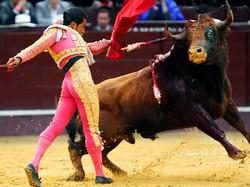 Испанский суд разрешил проводить корриду в Каталонии