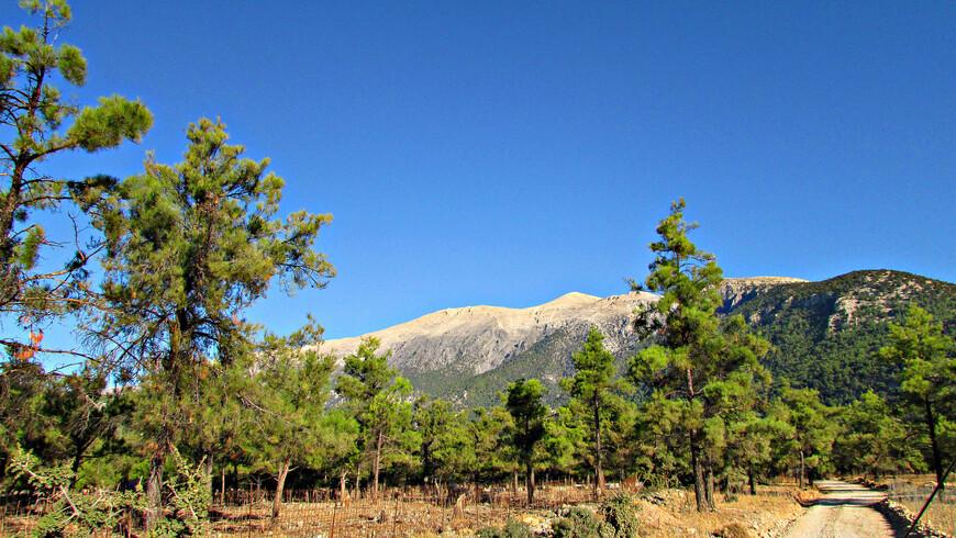 На высоте горы не казались уже такими безжизненными, как прежде. Появились деревья. Можно даже сказать, что мы оказались в лесу.