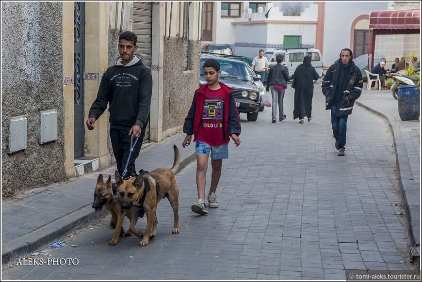На одном поводке выгуливают сразу двух собак. Дешево и сердито.