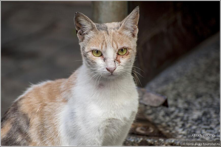 Какое Марокко без кошек. Их тут много повсюду. А вот во Вьетнаме мы кошек почти не видели.. Вот такая неухоженная жительница Касабланки. Потому что бездомная... Но кошек здесь подкармливают...