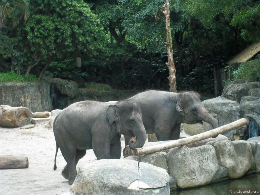 сингапурский зоопарк - самый лучший, наверное, но в ростове-на-дону ничуть не хуже. в екате - отстой. при наших территориях администрация жмется и тупит, но, вроде бы, нашил новое место. слава богу