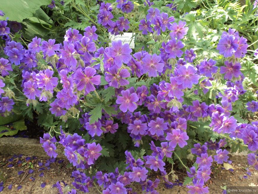2011-05-28 13-31-51_0186.JPG