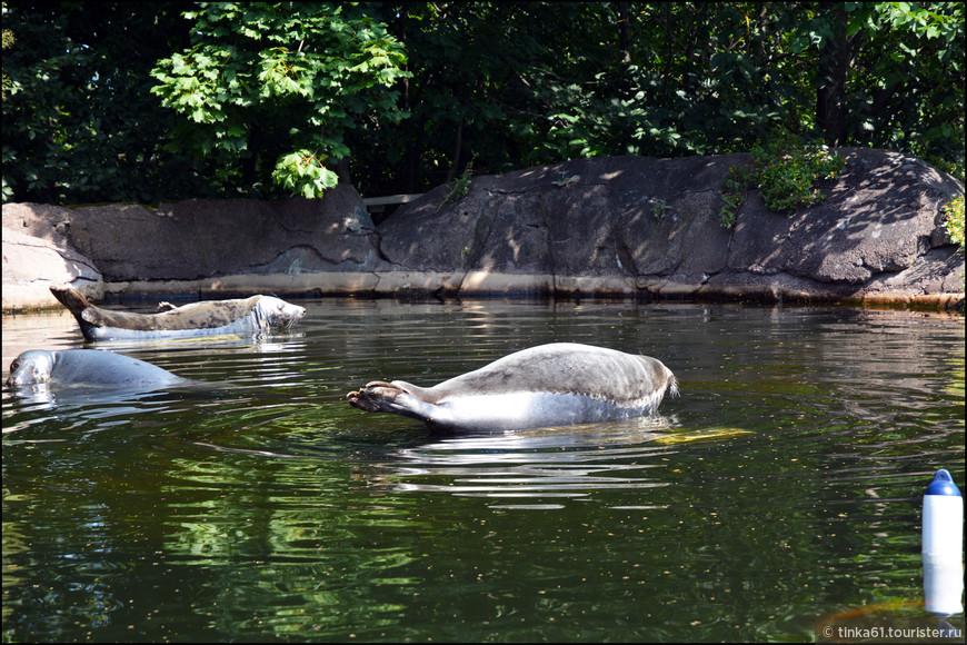 Тюлени на отдыхе.