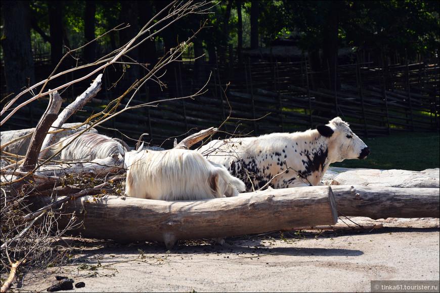 Местные породы коров и коз.