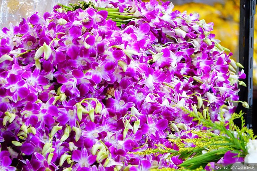 Прилетела домой, показала фотографию своей орхидее, чтобы ей стало совестно и она наконец-то зацвела. Не помогло...