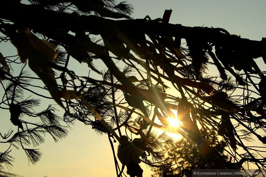 У храма деревья все обвешаны ленточками. Люди верят, что так исполняются желания.