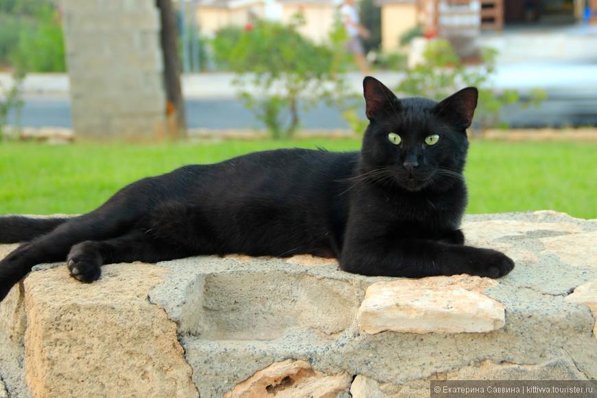 Кипрские коты- это бренд. Но этот кот с такой интересной  даже аристократической мордой - не мог не привлечь внимание.