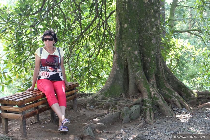 В саду встречаются лавочки из бамбука, на которых можно отдохнуть