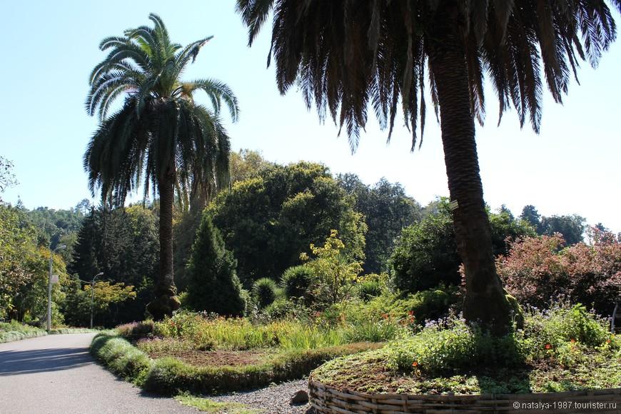 По саду проходит одна главная асфальтированная дорожка около 3 км длиной, от неё уже идут ответвления в разные стороны. Если не заходить в дебри, то проблемы «заблудились» не будет.