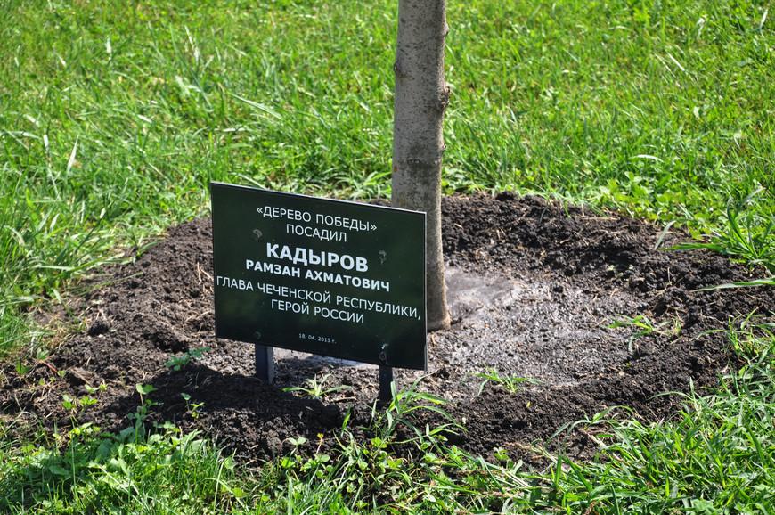 38. Возле входа в комплекс высажены «Деревья Победы». Одно из немногих упоминаний Рамзана Кадырова в городе. Как я уже говорил, его лицо и имя встречается в городе намного реже, чем его отца или Путина.