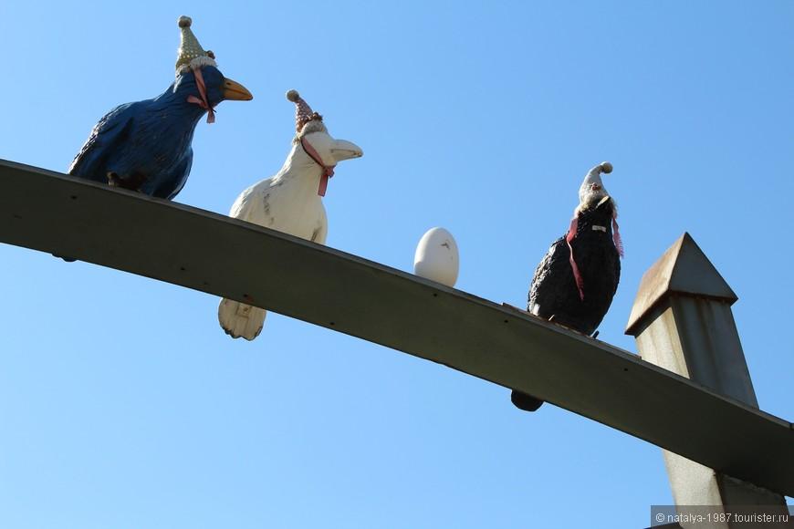 Увидели вот таких птичек.