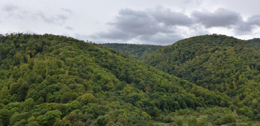 хотя вот таких густых лесов в стране раз-два и обчёлся