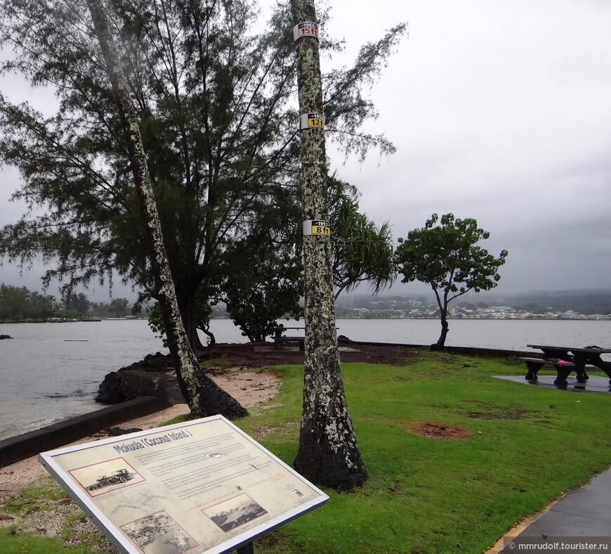 отметки на дереве с максимальным уровнем воды по годам