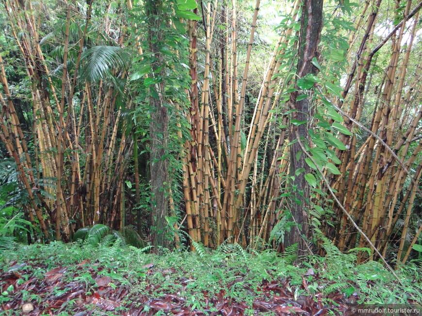 бамбуковый лес-начала начал