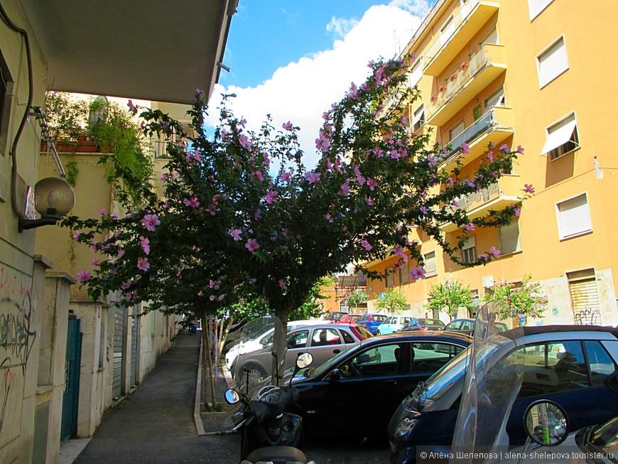 Все тот же Трастевере. Вроде бы ничего особенного, дома как дома. На как преображают обыденную улицу цветущие деревья! А они по всему городу, разных цветов, форм и размеров.