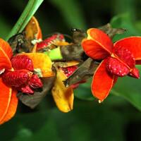 В лесах острова произрастает 15 000 видов цветковых растений
