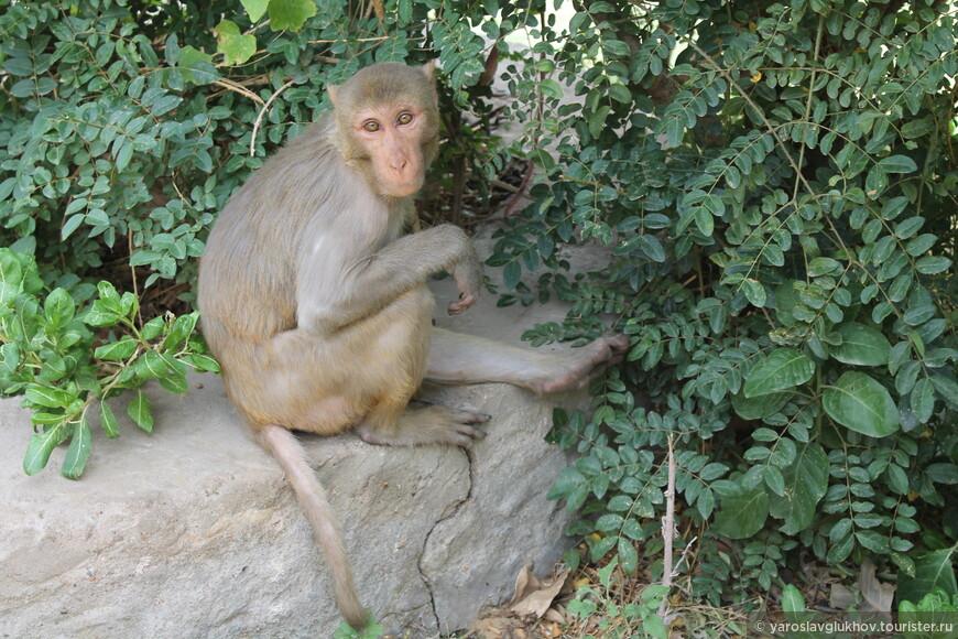 На подходе к храмам нам попалась эта обезьяна, сидевшая на камне.