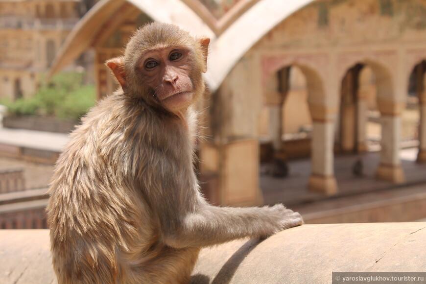 Портреты обезьян.