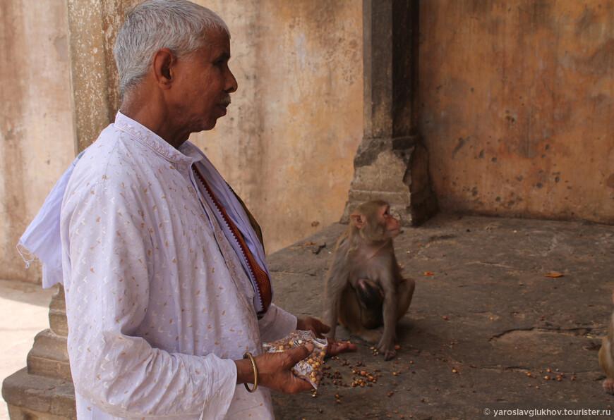 Местный монах подкармливает обезьян.