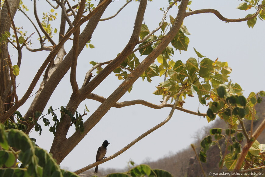 На обратном пути мы увидели очень интересную птичку.